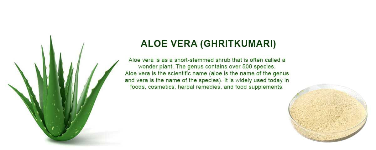 aloe vera extract supplier in india