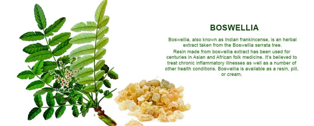boswellia extract supplier