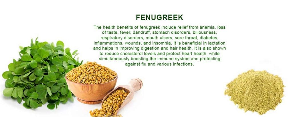 fenugreek methi extract supplier