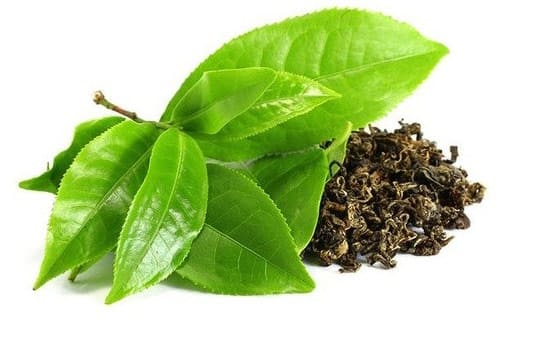 green tea extract supplier india