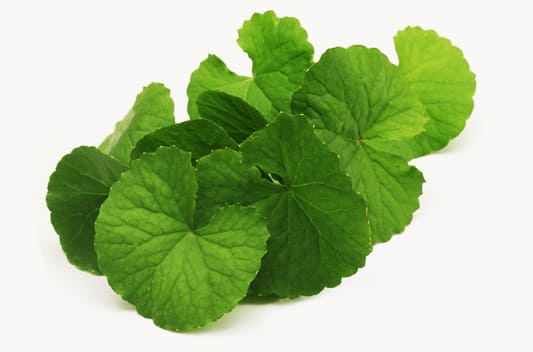 gotu kola extract supplier india