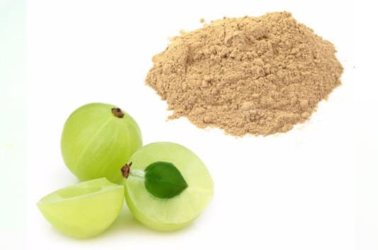 amla extract supplier india