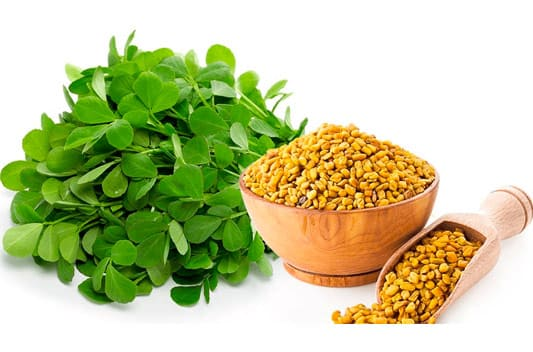 fenugreek extract supplier india
