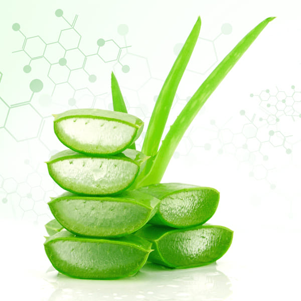 Aloe Vera Extract Supplier
