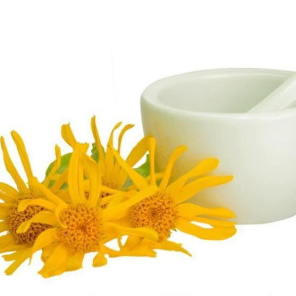 Arnica Extract Supplier India