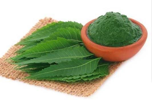 neem extract supplier india